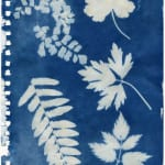 Breathe Journey Cyanotype Image